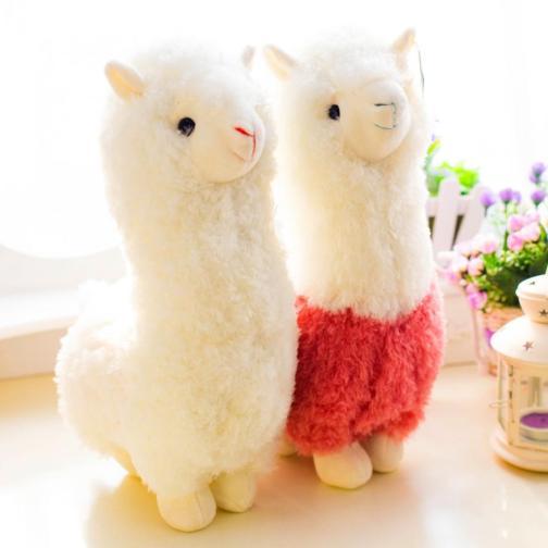 alpacaa